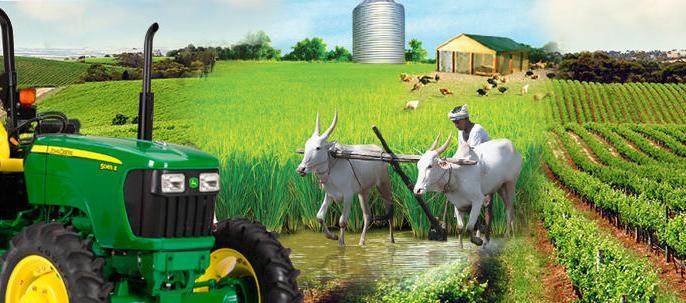 कृषीपुरक व्यवसायासाठीही आता खेळत्या भांडवलावर पतपुरवठा