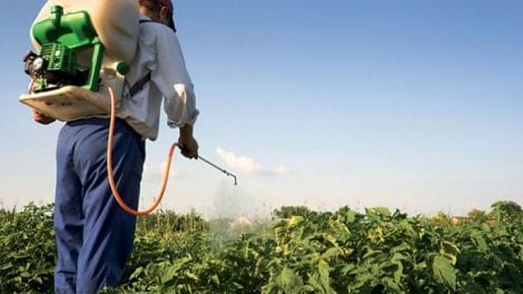 Rates of chemical fertilizers are increased