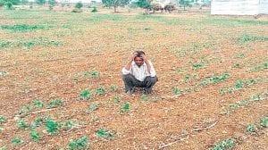 शेतकरी अडचणीत