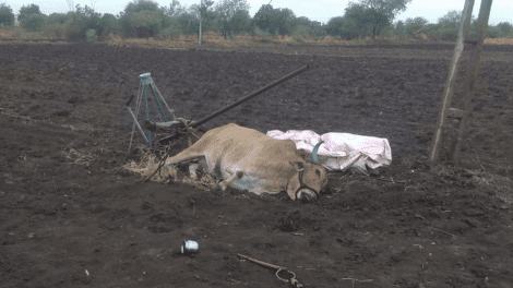 The death of the farmer by electric shock