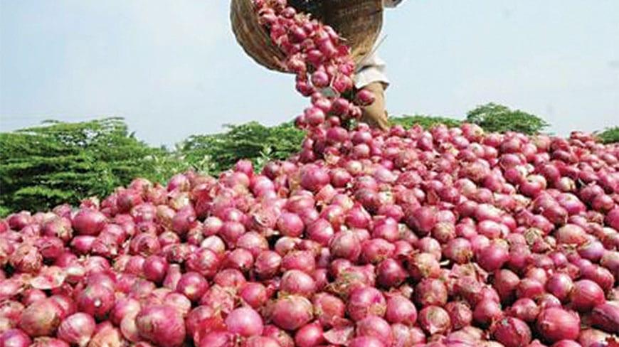 कांदा उत्पादक