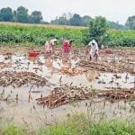 अतिवृष्टी बाधित शेतकरी