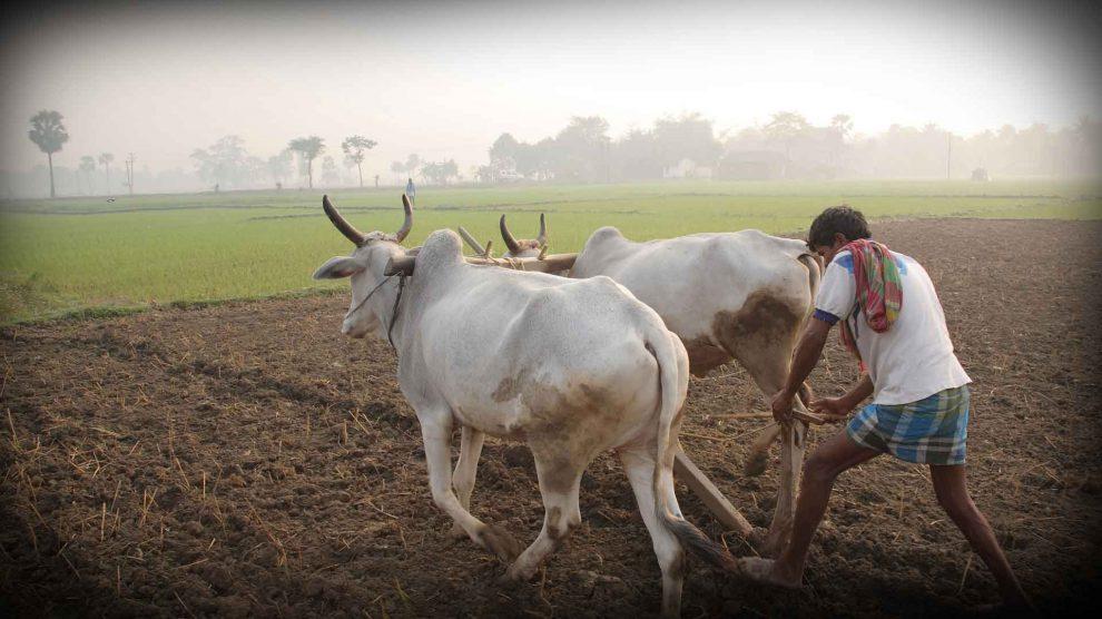 शेतकऱ्यांच्या बँक खात्यावर पैसे जमा