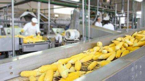 सूक्ष्म अन्नप्रक्रिया उद्योग