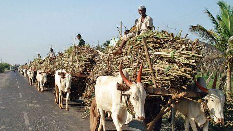 ऊस उत्पादक शेतकरी