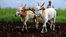 शेती आणि शेतकरी