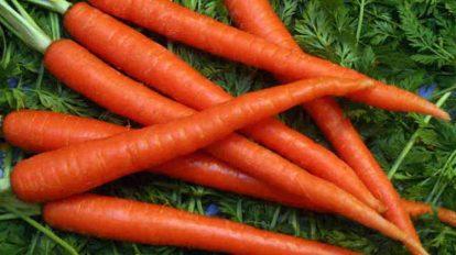 गाजर का महत्वाचं असत